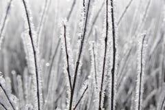 Funkelnder Frost Stockbilder