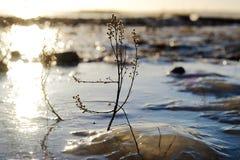 Funkelndes Eis in der Sonne Stockfoto