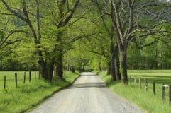 Funken-Weg in Cades-Bucht von rauchigen Bergen, TN,  Lizenzfreies Stockbild