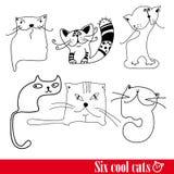 funkey έξι γατών ζωνών Στοκ Εικόνες