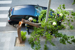 Funktion mit zwei Feuerwehrmännern. Defekter Baum nach einem Windsturm. Lizenzfreie Stockfotografie