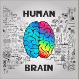 Funktionen des linken und rechten Gehirns mit Gekritzeln Lizenzfreie Stockbilder