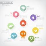 Funktionen von Körper infographics Lizenzfreies Stockfoto