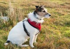 Funktions-Hund lizenzfreie stockfotos