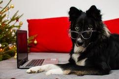 Funktionsduglig hund på en bärbar dator fotografering för bildbyråer