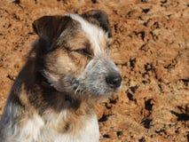 Funktionsduglig hund på torkad jord Arkivbilder