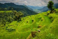 Funktionsduglig kvinna i Himalayan fält Arkivfoton