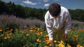 Funktionsduglig man för by som samlar gulingblommor arkivfilmer