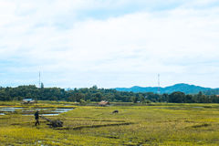 Funktionsduglig risväxt för bonde i lantgård av Thailand Fotografering för Bildbyråer