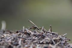 Funktionsdugliga myror Arkivfoton