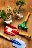 Funktionsdugligt hemma med växter Fotografering för Bildbyråer