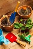 Funktionsdugligt hemma med växter Royaltyfri Fotografi