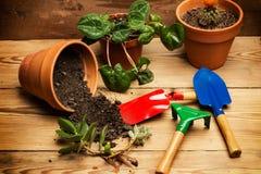 Funktionsdugligt hemma med växter Royaltyfri Bild