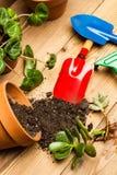 Funktionsdugligt hemma med växter Arkivfoto