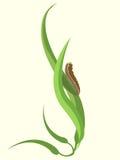 Funky Caterpillar Stock Photo