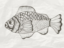 Funky Fish Royalty Free Stock Image