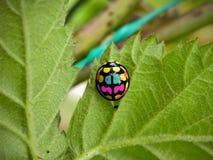 Funky Ladybird Beetle royalty free stock photography