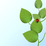 Funky lieveheersbeestje Stock Fotografie