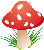 Funky toadstool Royalty Free Stock Photo