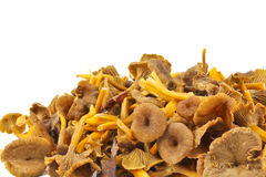 Funnel Chanterelle Royalty Free Stock Photography