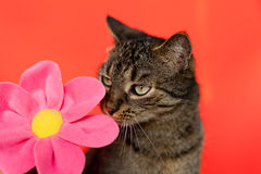 Funny. Looking cat and a flower Royalty Free Stock Photos