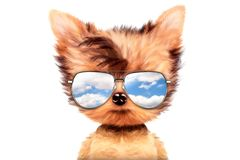 Dog in sunglasses  on white background. Funny adorable dog wearing sunglasses  on white background. Holiday and vacation concept. Realistic 3D illustration Royalty Free Stock Photos