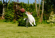 Funny American football player intercepts touchdown pass in high jump Royalty Free Stock Image