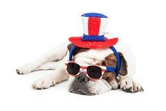 Funny American Holiday Bulldog Royalty Free Stock Image