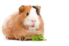 Funny animal Stock Photo