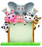 Funny animal with blank sign Royalty Free Stock Photo