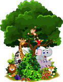 Funny animal cartoon with forest background Stock Images