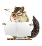 Funny animal chipmunk with glasses reading book Stock Image
