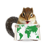 Funny animal chipmunk holding map on white Royalty Free Stock Photos