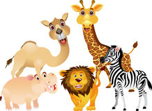 Funny animal collection Stock Photo