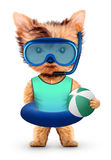 Funny animal in diving mask and swimming ring Royalty Free Stock Photography