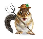 Funny animal farmer, squirrel with pitchfork and hat isolated on Royalty Free Stock Photos