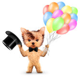 Funny animal keep balloons and cylinder Stock Photo