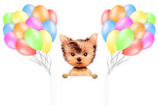 Funny animal keep a banner with balloons Royalty Free Stock Photography