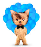 Funny animal keep a bunch of balloons Stock Photos
