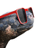 Funny animal portrait of an old galapagos tortoise with big red nerdy sunglasses royalty free stock image