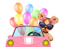 Funny animal sitting in a car Royalty Free Stock Photography