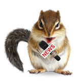 Funny animal squirrel with news microphone. On white stock images