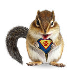 Funny animal super hero, squirrel unbuckle his fur. Isolated on white