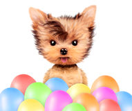 Funny animal surrounded by ballloons. And keep a balloon isolated on white background. Birthday and party concept. Realistic 3D illustration Stock Image