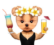 Funny animal in swimwear holding cocktails Royalty Free Stock Photos