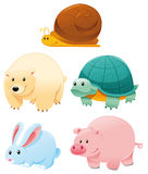 Funny animals Stock Images