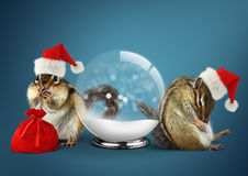 Funny animals chipmunks dress santa hat with snow ball and bag, Royalty Free Stock Photo