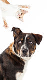 Funny Annoyed Dog Looking At Playful Cat Stock Photo