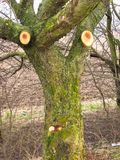 Funny annoyed tree Stock Photography