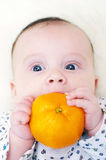 Funny baby age of 3 months tastes tangerine Stock Photography